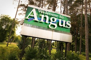 SUBMIT: ANGUS-279-300x200.jpg